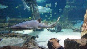 Should I Bring My Toddler To The Riverhead Aquarium