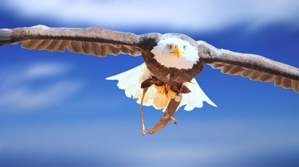 eagle soaring through the air