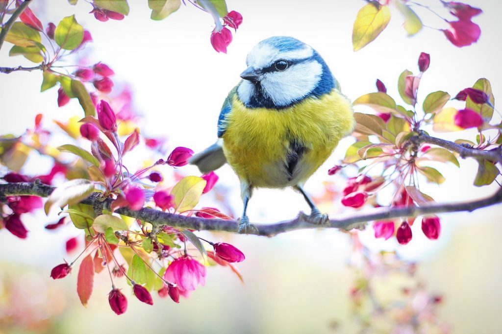 Blue Bird in a tree