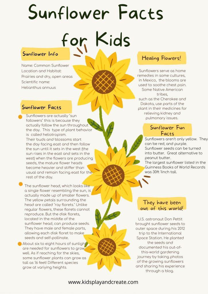 sunflower facts worksheet
